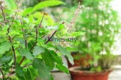 The Other Side of Tulsi